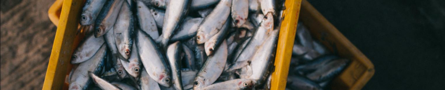 kosher fish - which fish are kosher? | ottawa vaad hakashrut